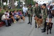 La sécurité canine