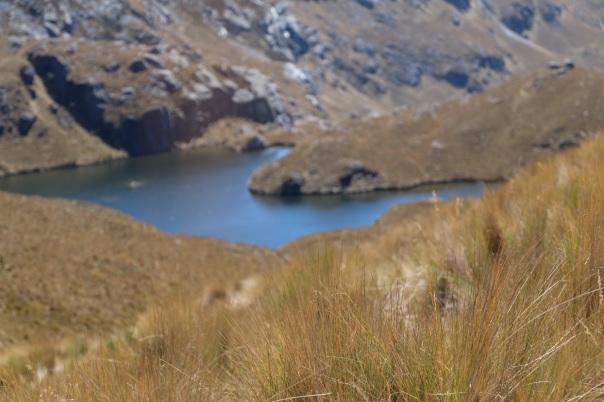 Lagune et Páramo, Parc National d'El Cajas