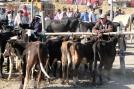 Marché aux animaux, Otavalo