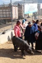 Marché d'Otavalo