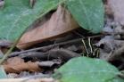 Grenouille jaune