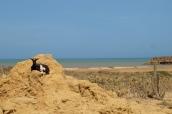 Chèvre sur la plage de la Boquita