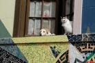 Chat et chien, Valparaiso