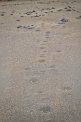 Traces de pas sur le Solitario