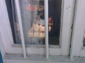 Le chat qui vole la vedette aux graffitis