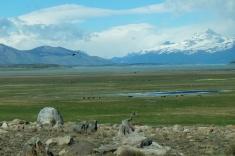Les condors survolent les steppes argentines
