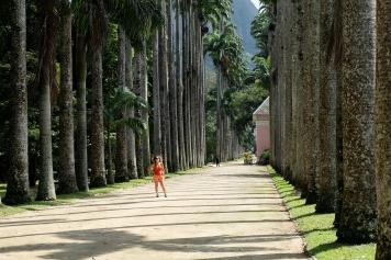 Palmiers impériaux, jardin botanique