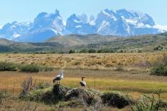 Montagne et canards