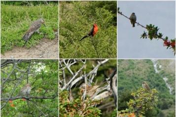 Différentes espèces d'Oiseaux