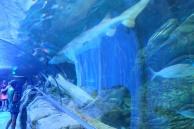 Aquarium, Sydney