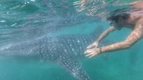 Clément et le requin