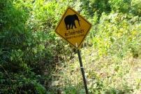 Attention éléphants sauvages