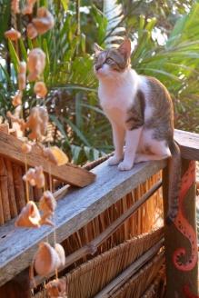 Le chat de Coral Beach