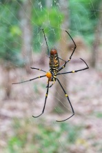 Araignée, Gunung Leuser, Tangkahan