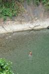 Rivière Tangkahan