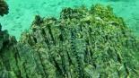 Serpent de mer, Snorkeling, Pulau Weh