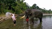 Bain des éléphants, Tangkahan