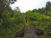 Balade à dos d'éléphants, Tangkahan