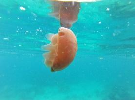 Méduse, Snorkeling, Pulau Weh