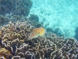 seiche,Méduse, Snorkeling, Pulau Weh