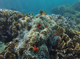 poissonsMéduse, Snorkeling, Pulau Weh